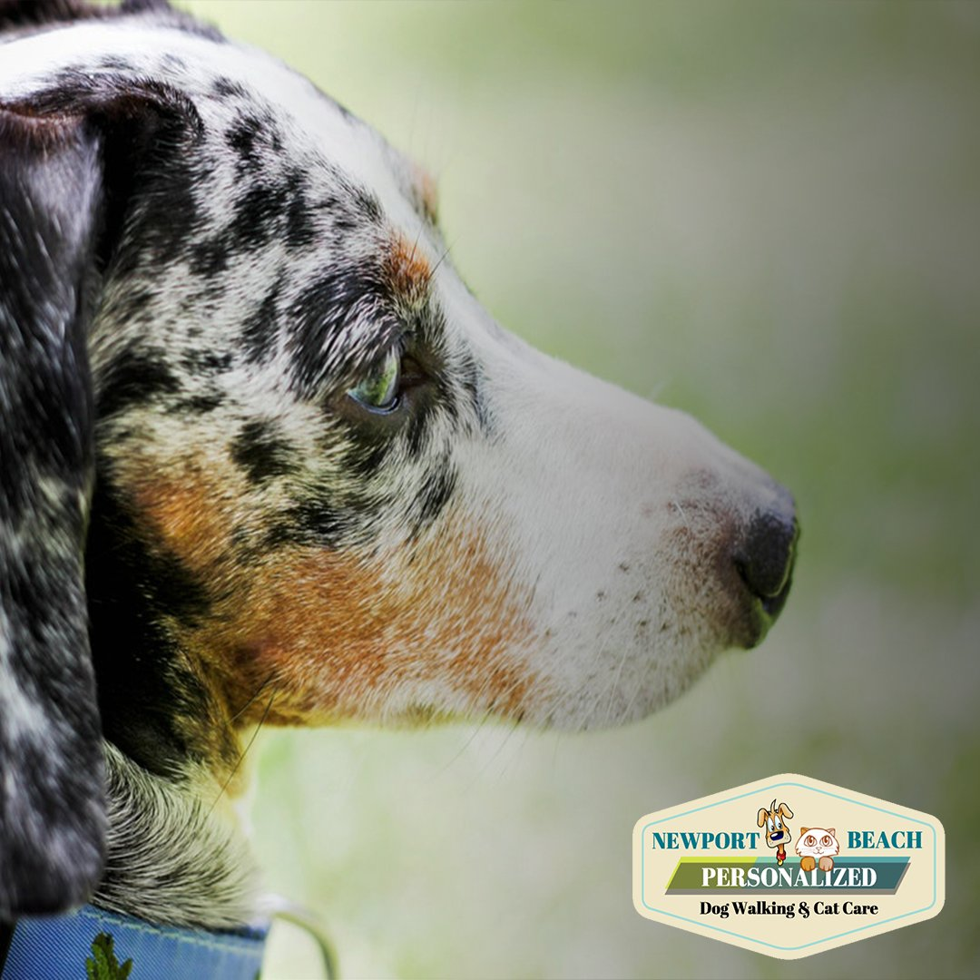 Dog Day Care Sarasota Fl