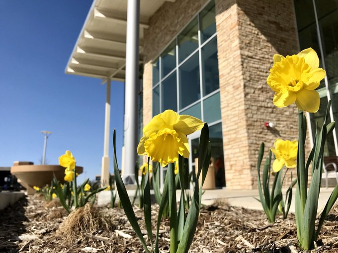 It's a sunny day and the flowers are in bloom outside the new #UISedu Student Union! #flowers #spring #Illinois @UISUnion https://t.co/dFcXdwTz59