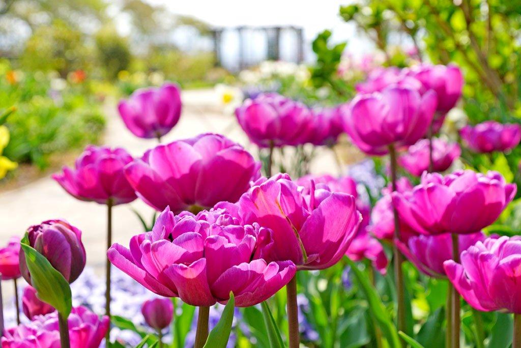 柴田町船岡城址公園から 今日も良いお天気で、何なら少し汗ばむぐらいの陽気です。 山頂のコミュニティガーデン(※個人的に)チューリップが咲きそろう今の時期が一番オススメだよ~!