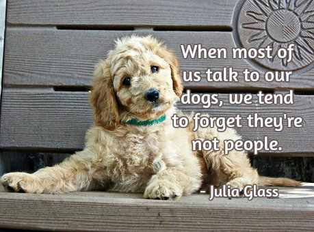 When most of us talk to our dogs, we tend to forget they&#39;re not people. -Julia Glass #quote <br>http://pic.twitter.com/xyag2jUsO7
