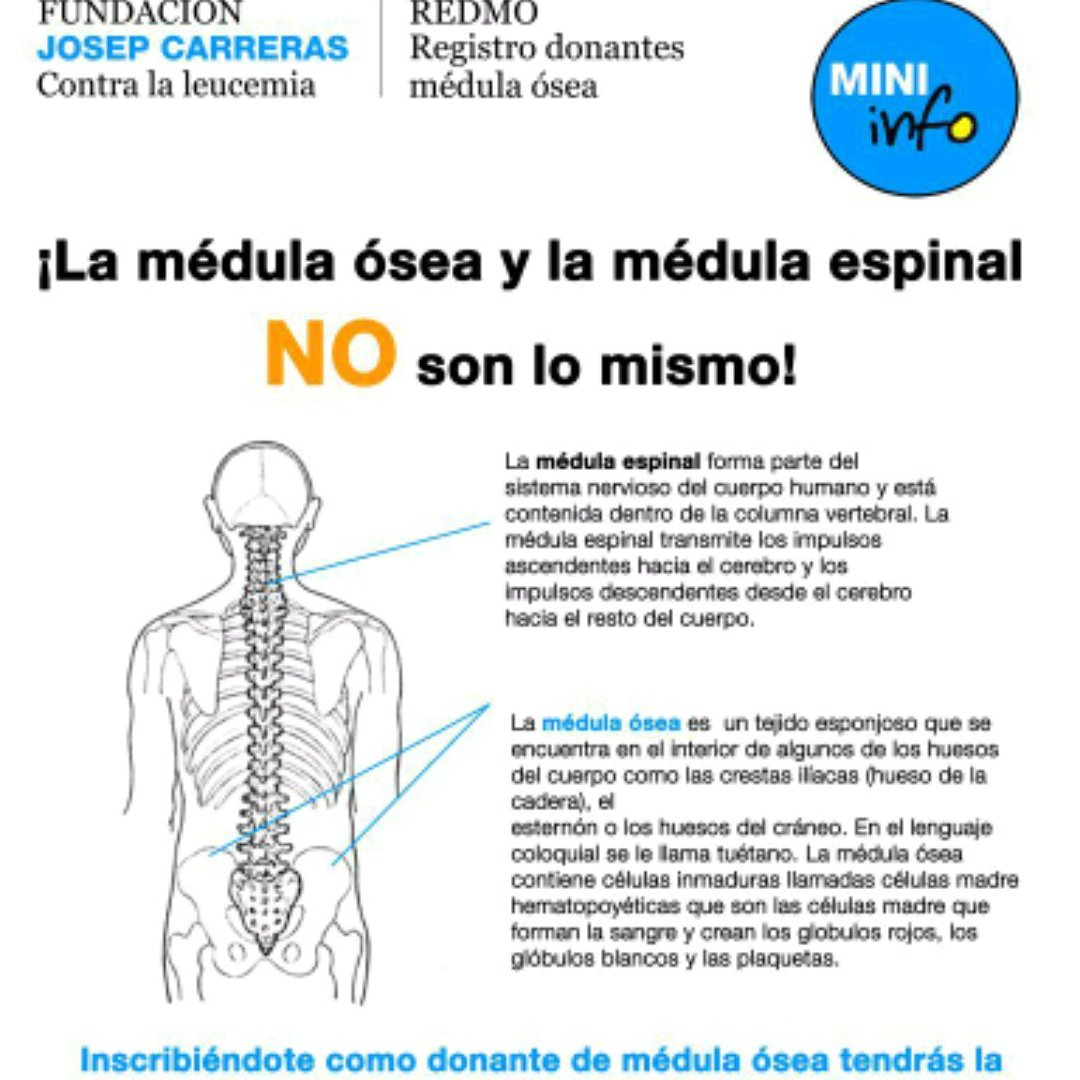 Excepcional Médula Espinal Anatomía Suministro De Sangre Bosquejo ...