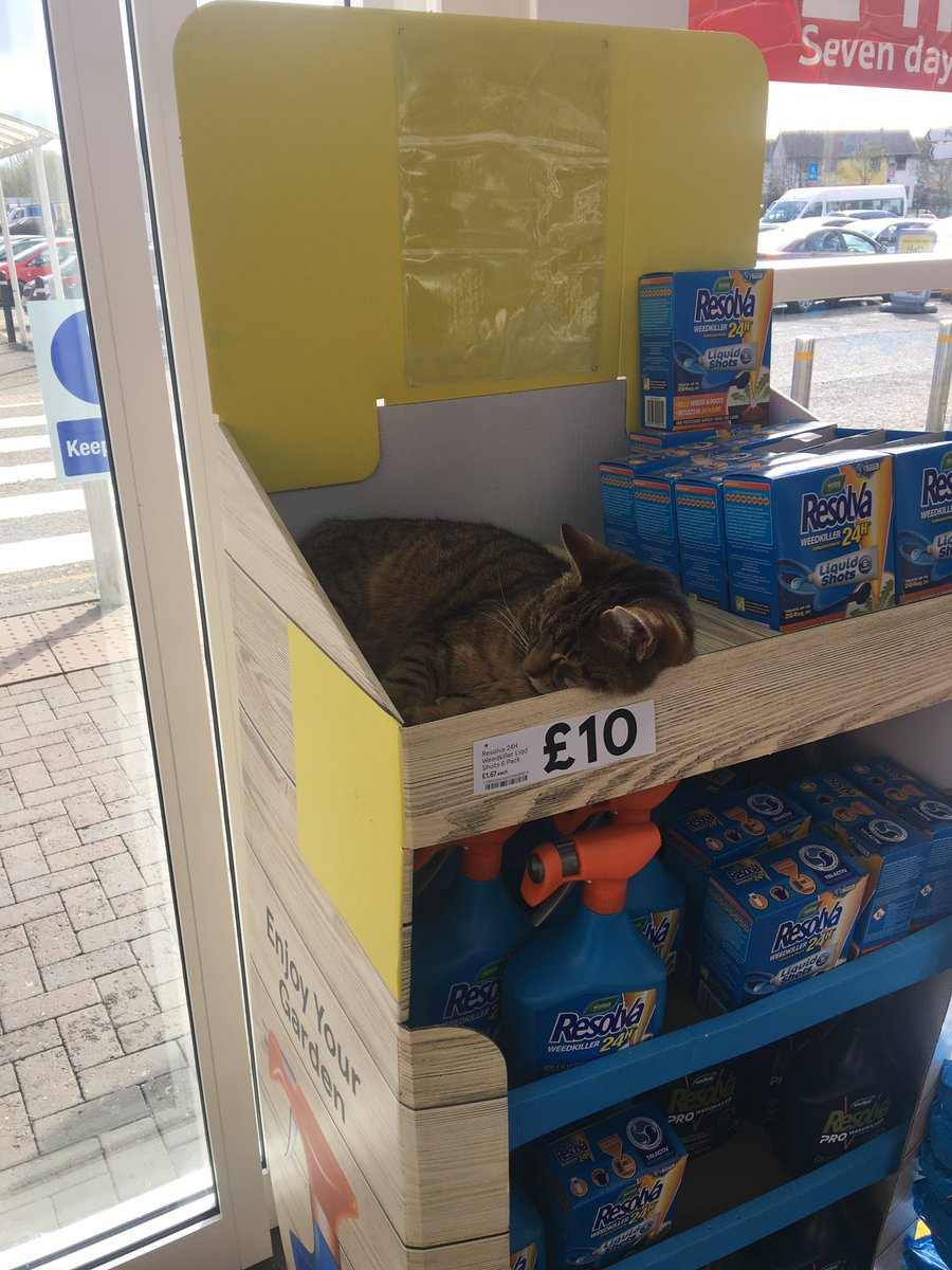 There's a cat for sale in Tesco for £10...