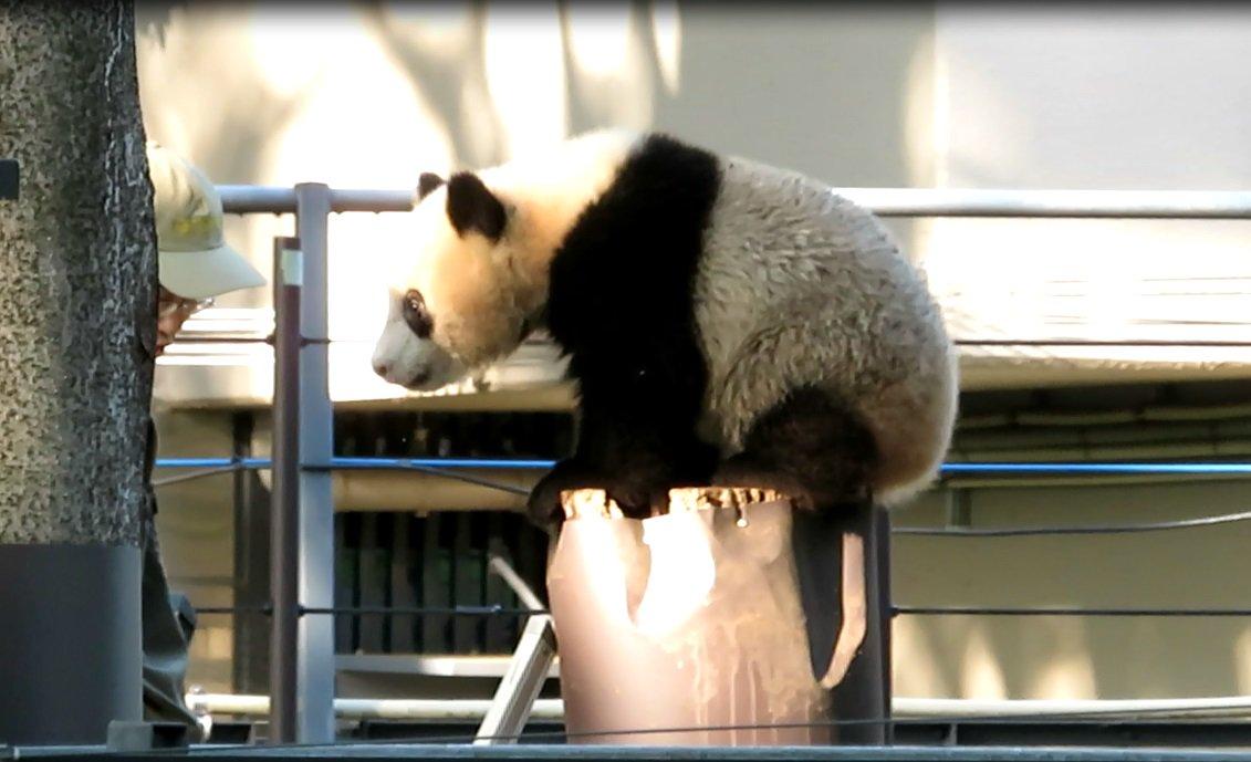 上野 動物園 シャンシャン ライブ 映像