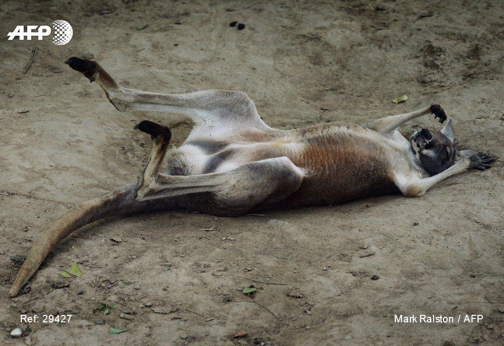 Un kangourou a trouvé la mort dans un zoo du sud-est de la Chine après avoir été la cible de jets de pierres de la part de visiteurs qui cherchaient à lui faire faire des bonds https://t.co/yEdISI7a8g #AFP