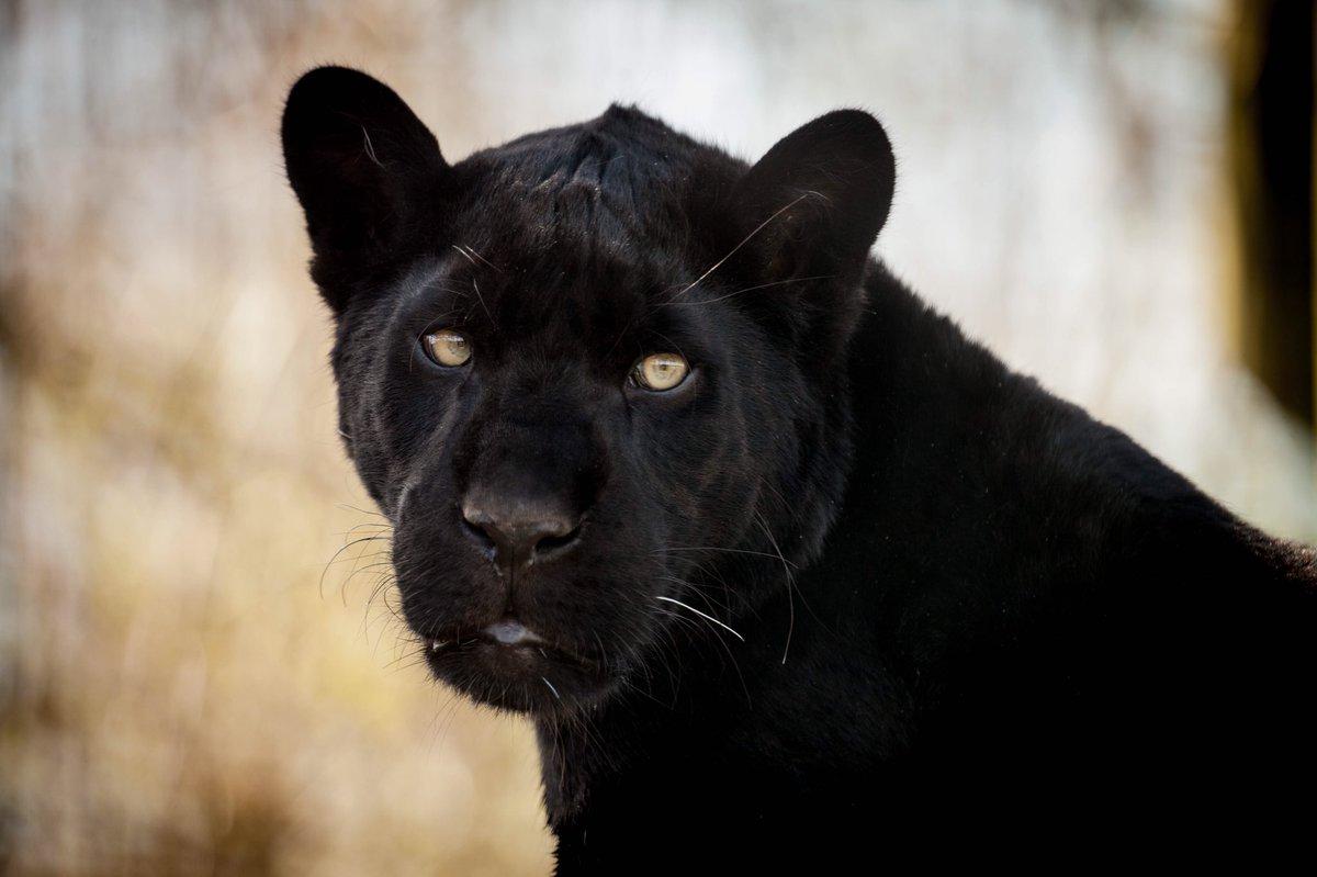 Maya The Jaguar's photo on #sunshine
