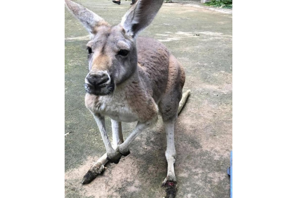 Brick-throwing #China zoo-goers kill #kangaroo, injure another  http:// str.sg/oprE  &nbsp;  <br>http://pic.twitter.com/7S5LFGUD7O