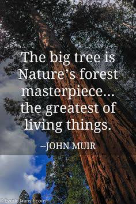 The Mighty Oak is Nothing More than an Acorn that Stood its Ground.  #Motivation #StrongmanJohn  #Faith #Inspiration<br>http://pic.twitter.com/grdrRZQy8X