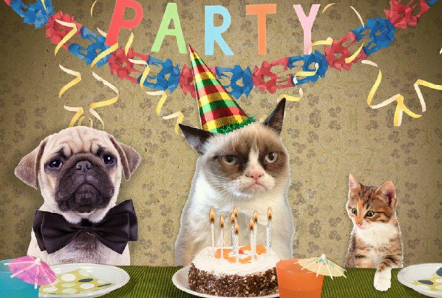 день рождения кошки ютуб тех