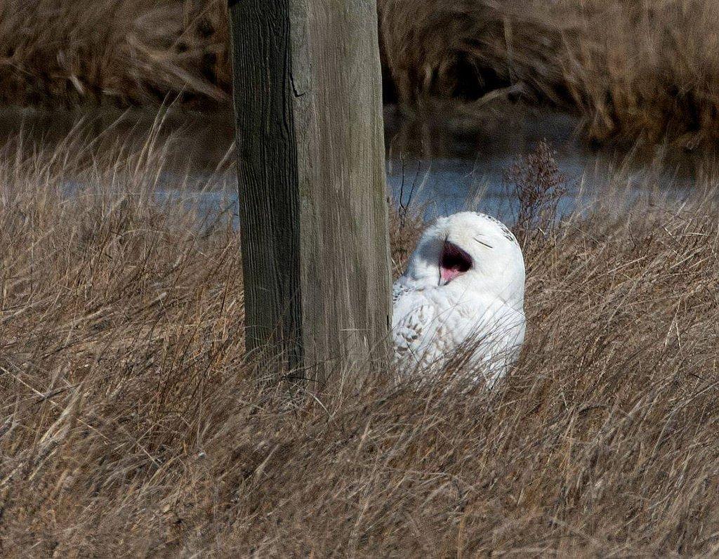 @Interior @NatlParkService Owl never sto...