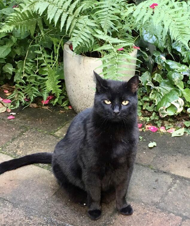Kitty wasn't happy getting his picture taken he was looking for titbits - lots of Cats &amp; Bicycles in #Amsterdam #catsoftwitter #cats #kitty #catlovers  #cat #catsrule #animallover #blackcatsoftwitter<br>http://pic.twitter.com/QcRRkw6UUs