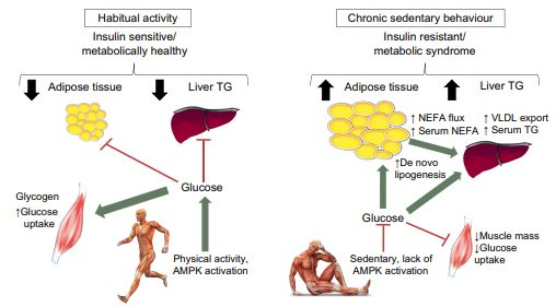 Short-term increased sedentary behaviour causes insulin resistance and increased abdominal and liver fat. Key message: avoid sedentary behaviour! #sedentary #physicalactivity #fitness #type2diabetes #insulin resistance #bodycomposition #liverfat #livuni  https:// rdcu.be/L5JH  &nbsp;  <br>http://pic.twitter.com/1UuKP6LRo7