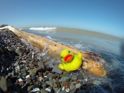 RT @OhioLakeErie: A little bird told me...Life on #LakeErie #PhotoContest 2018 now open, see https://t.co/Y0oTqdcFMH https://t.co/dTrp0ENiWb