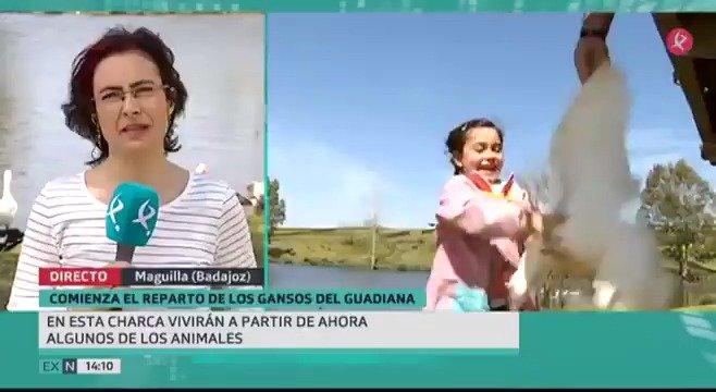 🦆🦆En #Badajoz sobraban... y en #Maguilla hacían falta. Mirad con que ilusión han recibido los niños del cole municipal la llegada de los