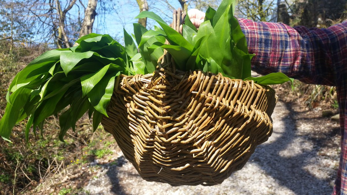 @joyladds&#39; #INCREDIBLE hand woven #basket full of #Ramson is on its way to you @LevanterFoods &amp; @BaratxuriBar and I&#39;ll be stopping by everyone later with more  @lancashirelife<br>http://pic.twitter.com/FCdoQ5Lghl