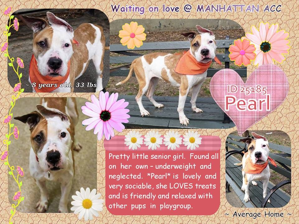 SENIOR #PEARL CONDEMNED BY #NYCACC FOR A #COLD! NEEDS  VET CARE,TLC &amp; LOVING HOME! SAVE THIS GENTLE SOUL! #RESCUEDOGS #FOREVERHOME  #SENIORDOGSROCK #FOSTER #ADOPT #SAVEALIFE  #EndBSL #RescueIsTheWayToGo  #HumaneNY #CIRDC #SavePEARL  https://www. facebook.com/mldsavingnycdo gs/photos/a.428526917333584.1073742030.112453902274222/712203702299236/?type=3 &nbsp; … <br>http://pic.twitter.com/U9I9lQkqH7