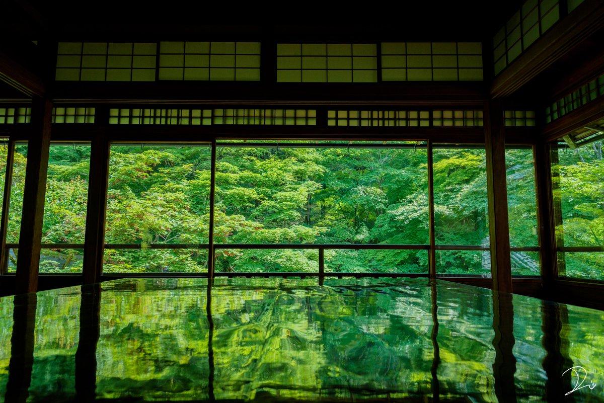 初夏、深緑の瑠璃光院。 今年も瑠璃光院 春の拝観が解禁されたようです。 反射する緑の世界が幽玄な世界を映し出します。 京都にお越しの際は行ってみてはいかが。