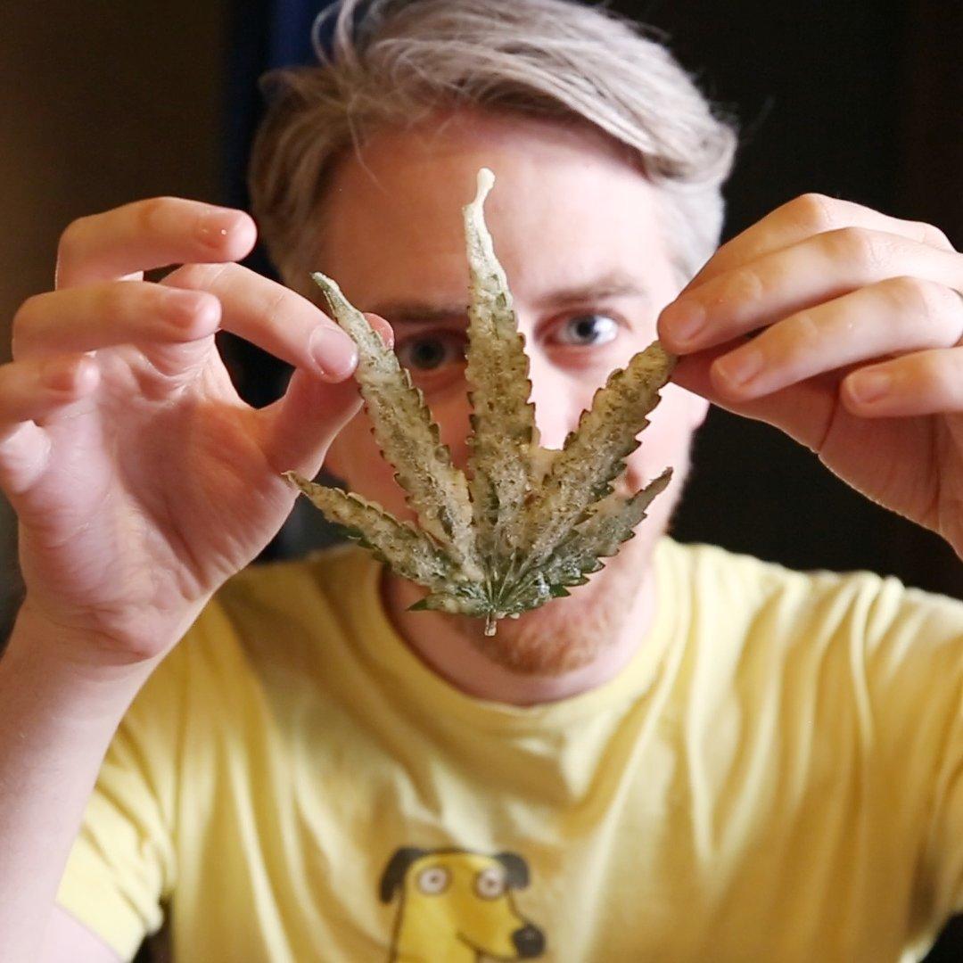 Как снимать пыль от конопли ввс фильмы как действует марихуана