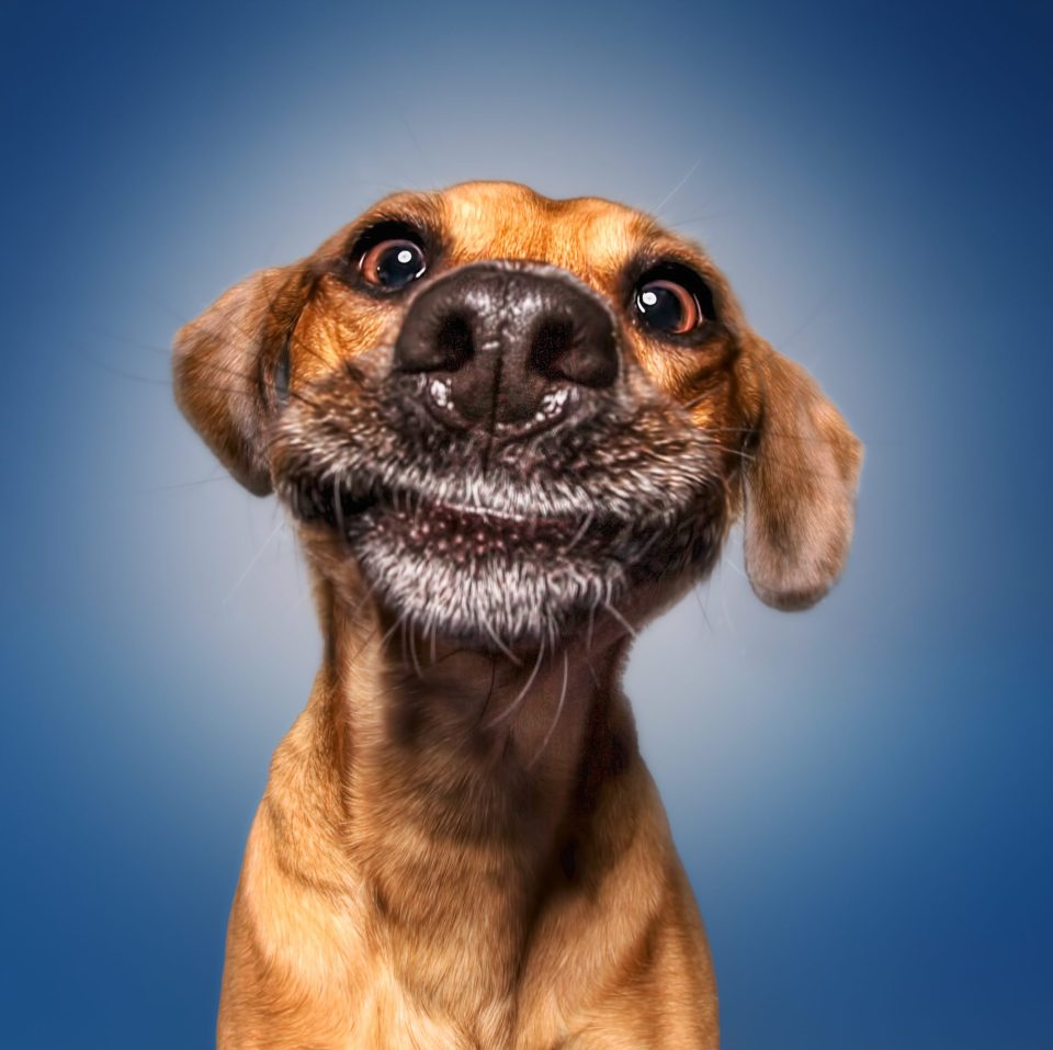 Its funny face fr abguidedogs alberta guide dogss tweet its funny face fr abguidedogs alberta guide dogss tweet voltagebd Images