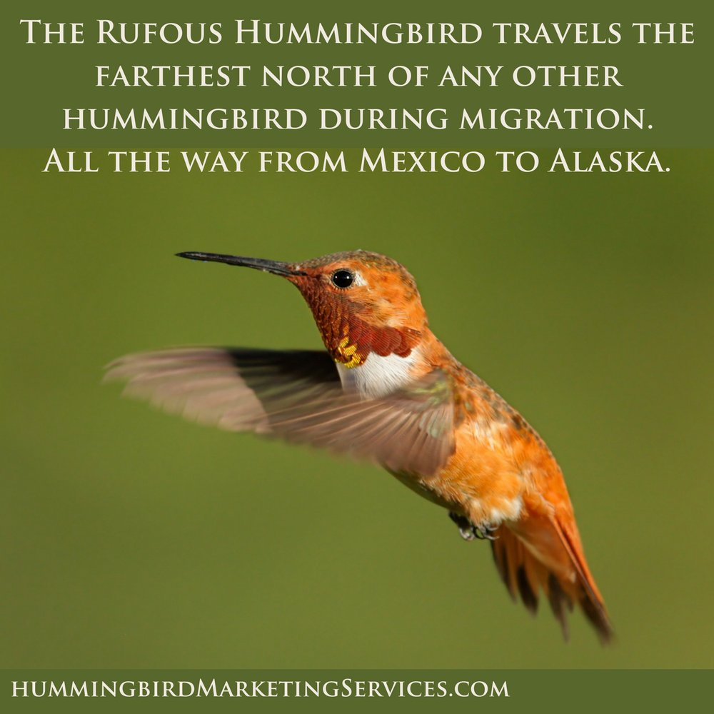 At #HummingbirdMarketingServices we travel the distance for our clients. We can help with just about anything. We are a #FlutterOfCreativeSolutions #Marketing #SmallBusiness #MediumBusiness #WebDesign #SocialMediaMarketing #SEO #GoogleAdWords #WordPress #Hummingbirds<br>http://pic.twitter.com/cnxdPFTCYD