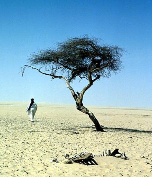 Der einsamste Baum der Welt: 400.000 Quadratkilometer Sand, mittendrin eine Akazie - zum heutigen 'Tag des Baumes' (aus dem @einestages-Archiv) https://t.co/pwxr9HMKp4
