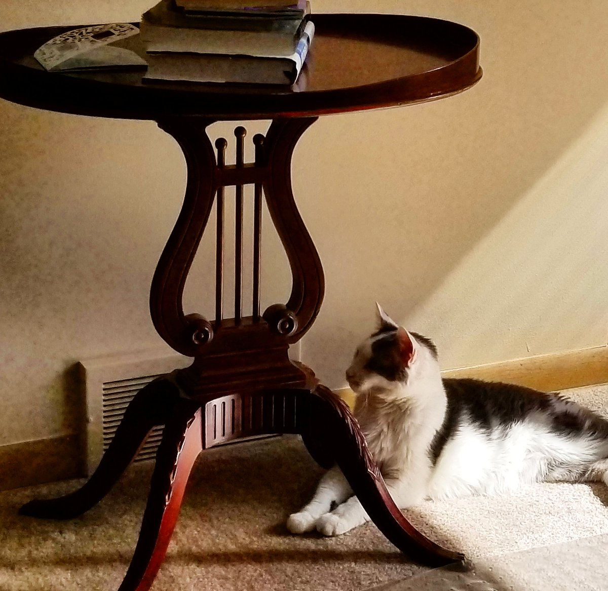 Enjoying the sunshine. . #pets #kitty #Cat #HomeSweetHome #sunnyweather #antiques #table #awesome #FridayFeeling #Weekend #havingfun #books #realestateagent #Nice #Weather #beautifulday<br>http://pic.twitter.com/HhiYFRuSui