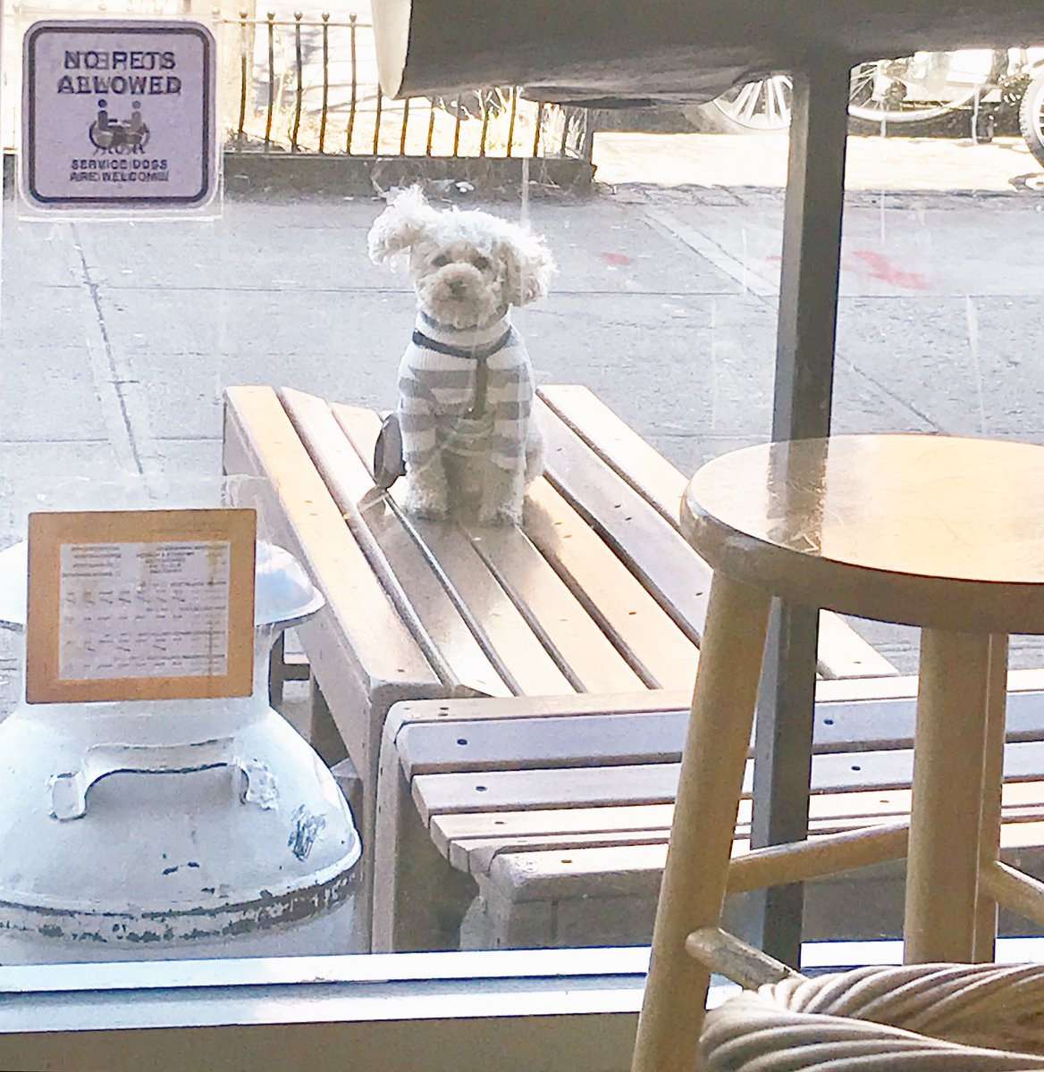 Oliver will not let a little wind compromise his security detail outside the #cofeeshop  #toypoodlepic.twitter.com/NU0RNMoaox