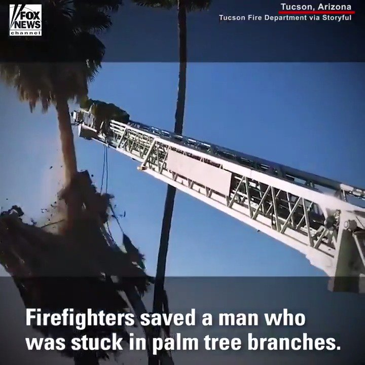 Firefighters made a terrifying rescue, cutting away branches to save a tree trimmer who was stuck in a palm tree. https://t.co/bYw6pBqUo1