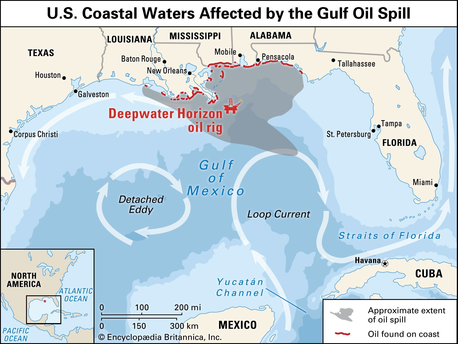 the gulf oil spill essay Below is an essay on bp gulf of mexico oil spill from anti essays, your source for research papers, essays, and term paper examples the largest accidental marine oil spill in human history happened april 20, 2010, in the gulf of mexico.