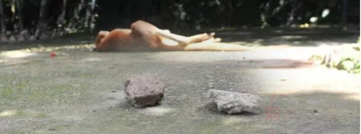 Canguro falleció en un zoo de China tras ser apedreado por el público https://t.co/VUNy0ZZwog #CNNChile