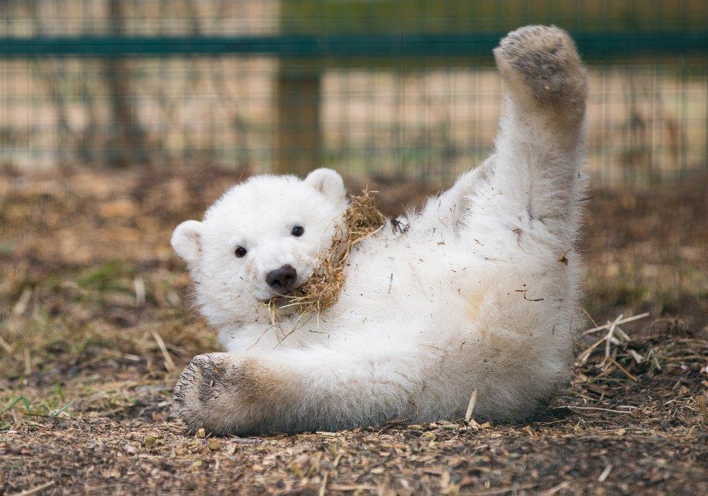 You can name this new polar bear cub - b...