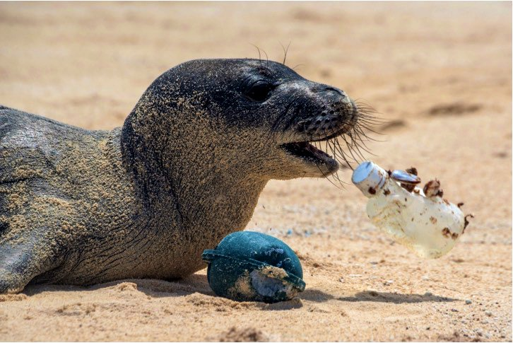 Want to be a good neighbor for marine mammals? Pick up your trash #EarthWeek <br>http://pic.twitter.com/fQp60SQ1rs