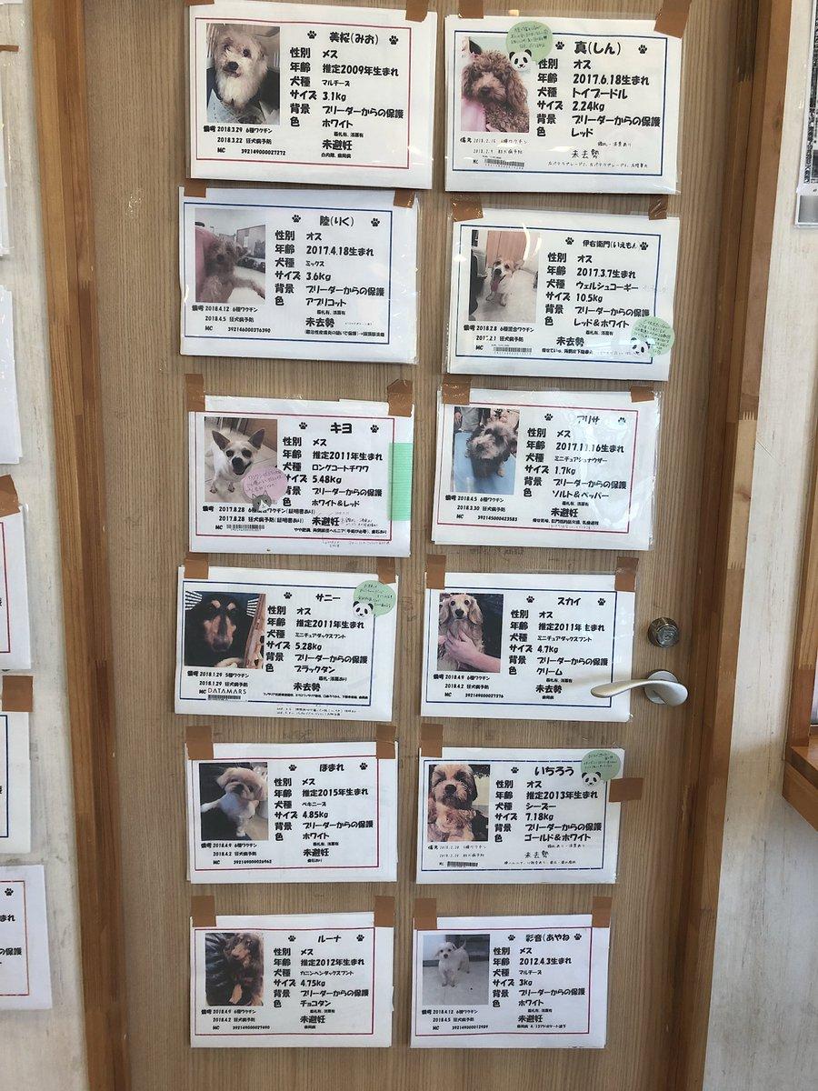 Hogoken Cafe 印西店 S Tweet 拡散希望 現在 保護犬