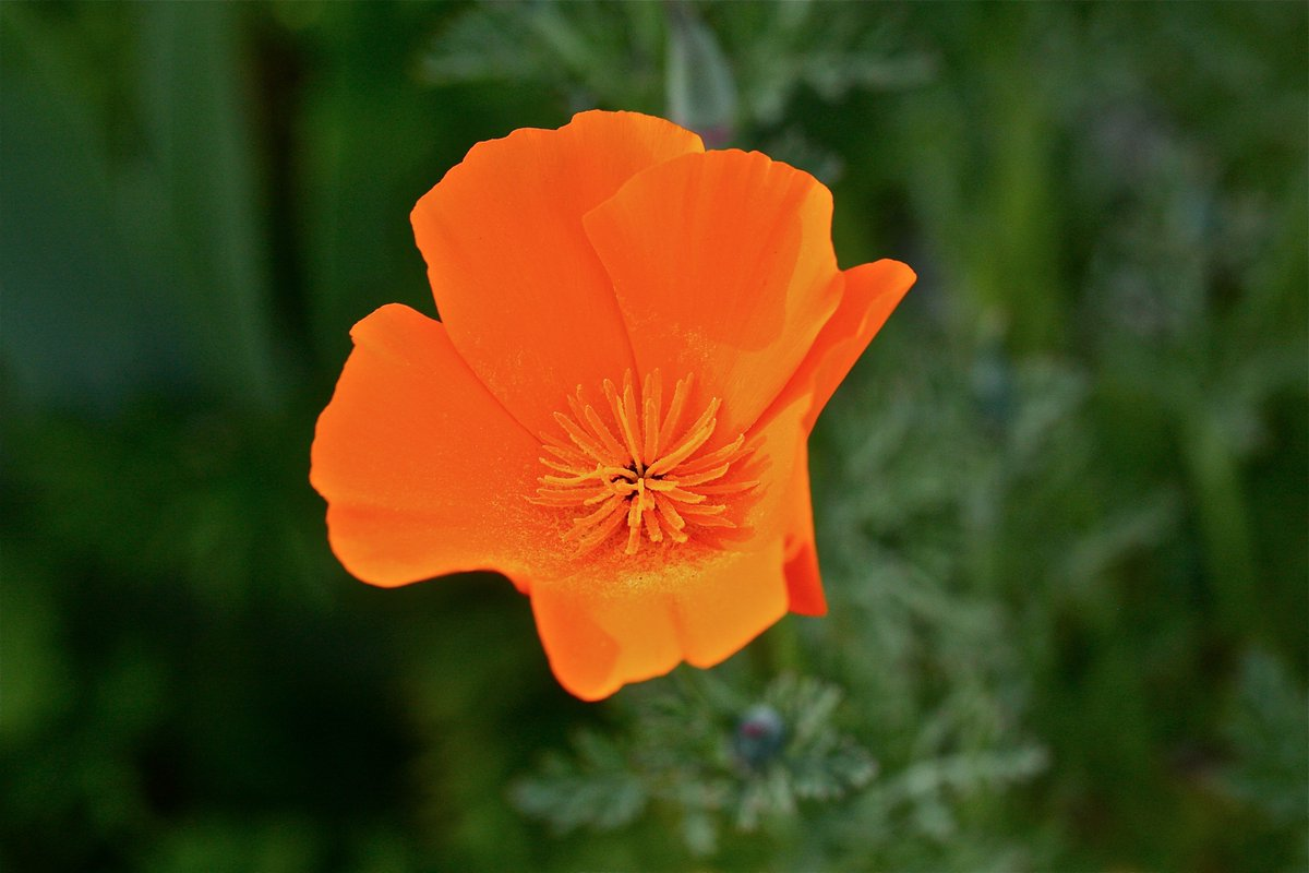 Tasha Sturm On Twitter Poppies Are Popping Spring Flowers And Sun