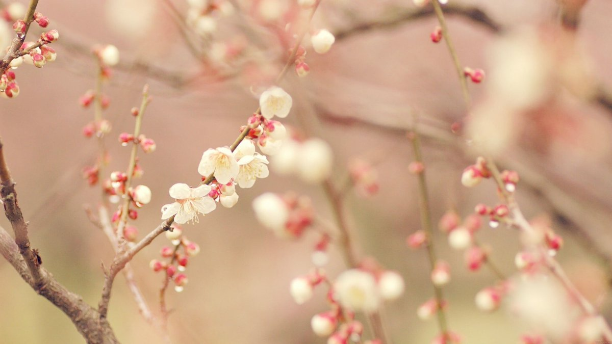 Good morning my dear friends🌸🌿 Happy weekend🌷💕🌷🍃