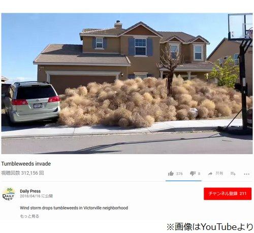 【大量発生】「回転草」が積み上がり自宅から出られず…米国でアクシデント