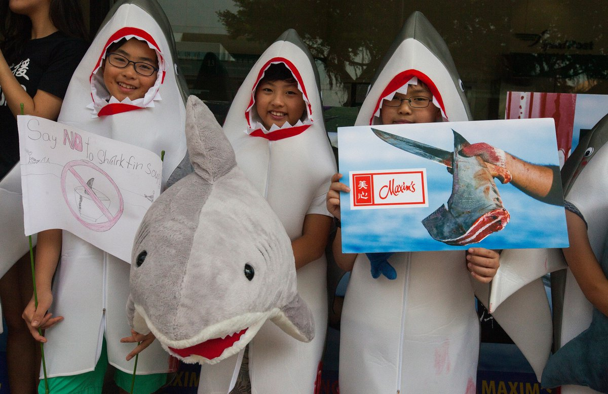BIG THANKS to all our young volunteers today! They want to live in a world that has not been totally depleted of its biodiversity by corporate greed. And who could blame them? * * * Maxim&#39;s! STOP SELLING #SHARK FIN! * * * <br>http://pic.twitter.com/A5fdfJMeam