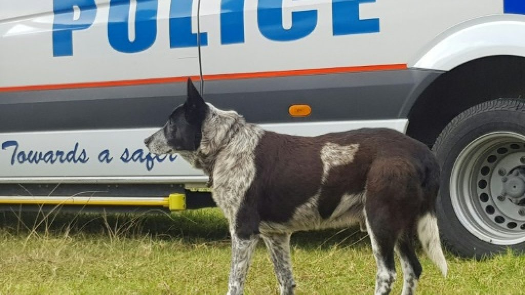 Australian dog receives police honours for keeping lost child safe https://t.co/w6HBa9oIcE
