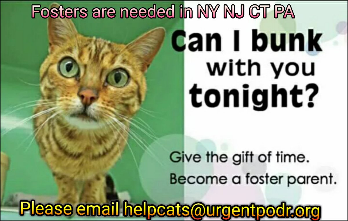 FOSTERS ARE NEEDED IN #NewYork #NewJersey #Connecticut #Pennsylvania  for #NYC #cats #kittens #dogs #puppies    To foster &amp; give the gift of time, please email: helpcats@urgentpodr.org   helpdogs@urgentpodr.org   #beKind #fosteringsaveslives <br>http://pic.twitter.com/5Cklh8Mat1