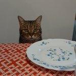 子供より先に食卓にくる猫w最初にきたからこそのこの表情が最高w