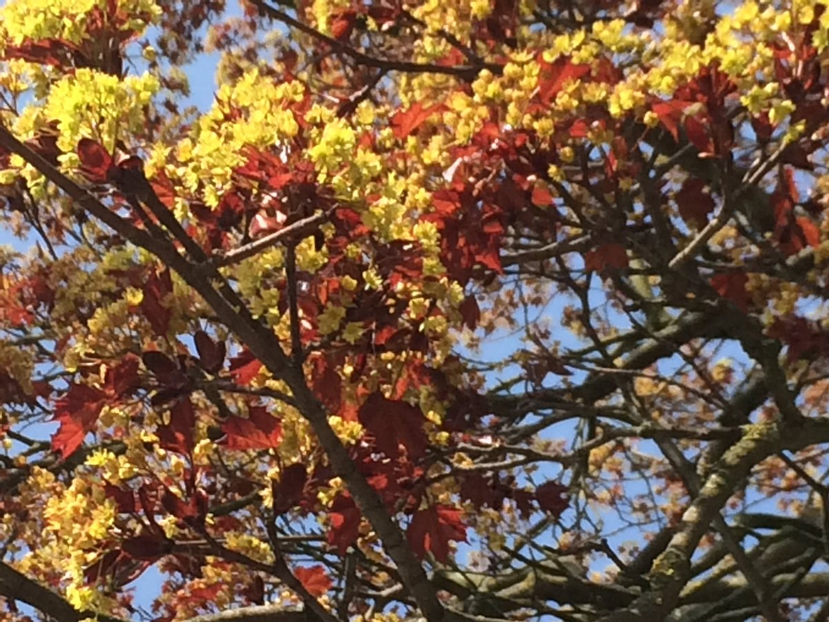 Thoughts For Hort On Twitter Can Anyone Help Me Identify This Tree