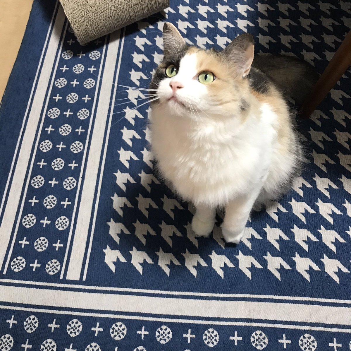 猫がきた日にもらった紙に「ねこは食べることと寝ることとあそぶことが大好きです」と書いてあって、いい生きものがきたなと思った。