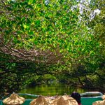 By taking a boat ride on the Sicao Green Tunnel, you will pass through a beautiful mangrove reserve. It is the very first canal developed more than 200 years ago. Beautiful scenery can be seen in every part of this magical tunnel. Check here:  https://t.co/uxN2MV0s1T