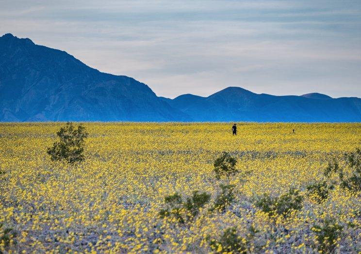 Where to See Wildflowers This Season: https://t.co/SDJ6jPf4My