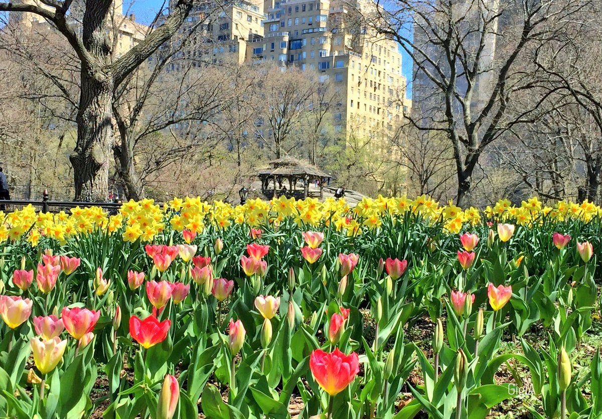 Spring Flowers And A View Of The Giginyc Gigi As Tweet
