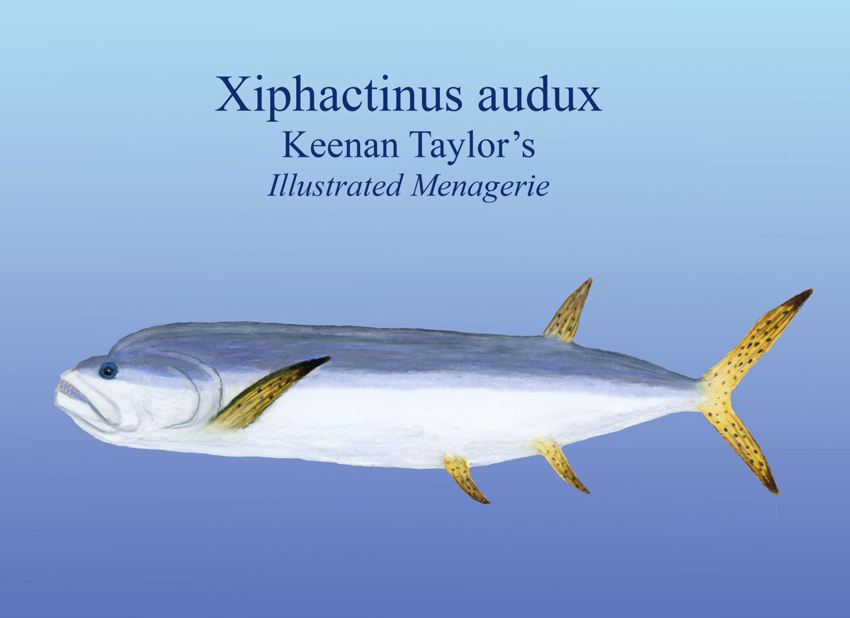 xiphactinus fish - HD1200×872