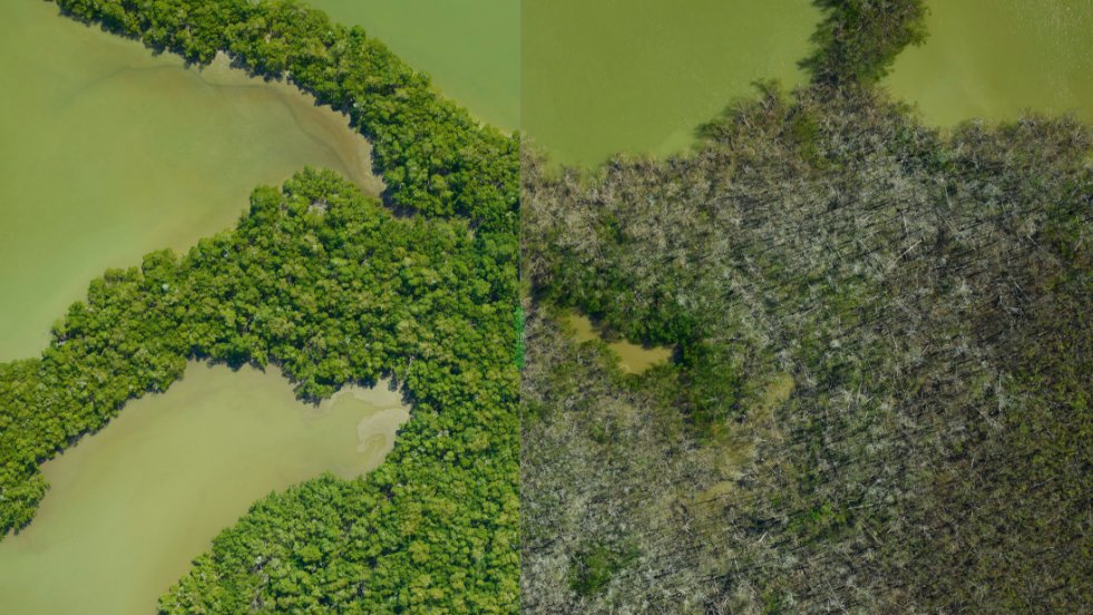 How do mangroves and rainforests grow and evolve over time? How do the devastating effects of massive storms impact these ecosystems? Our researchers are flying over the Everglades and Puerto Rico seeking these answers: https://t.co/axZualSZhd