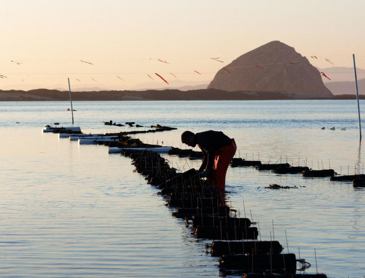 Discovering Morro Bay Oysters: https://t.co/ehyWc06f41
