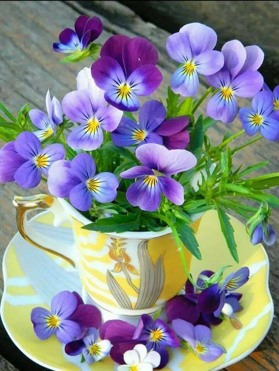 For you :-)) #HappySunday to all global friends 🌐💖