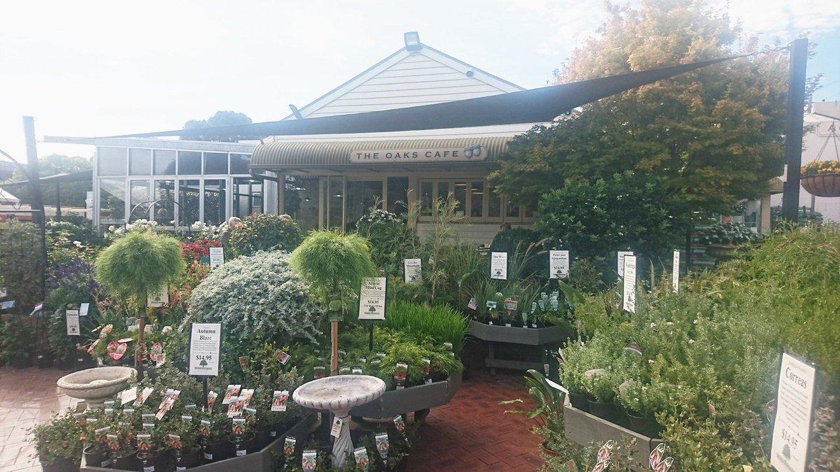 The Oaks Cafe At Acorn Nursery Https Eatandbemerryfortomorrowwet Blo Au 2018 04 Surrey Hills Html Pic Twitter