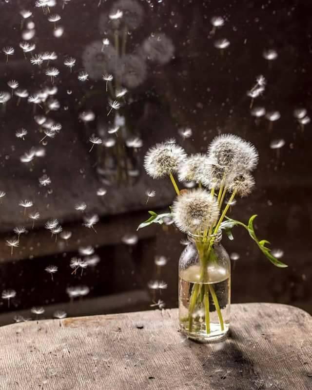la vita sorprende ad ogni privavera... b...